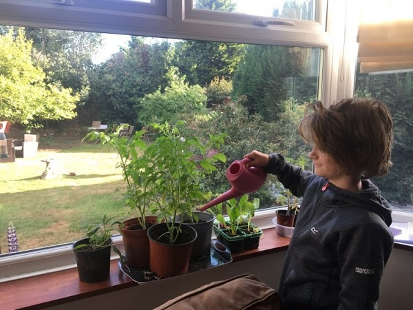Jack waters his tomato plants, donated by Bulwell Forest Garden