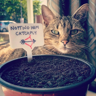 Cat pictured with a Nottingham Catchfly seed pot